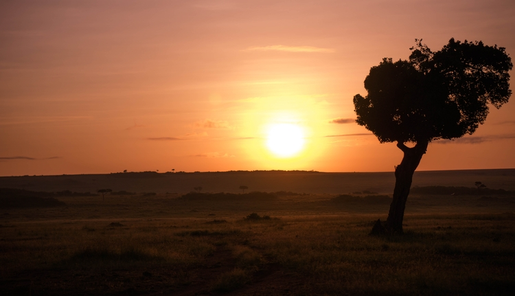 Mara Dawn. Acacia Tree. Maasai  - gabibi | ello