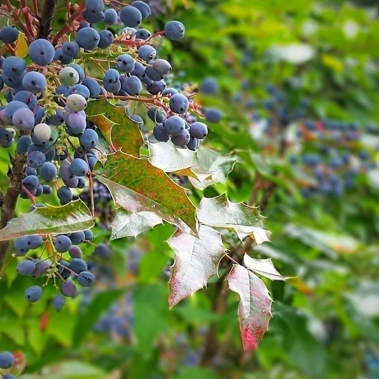 grapes..., somethingwithblue - aleksaleksa | ello