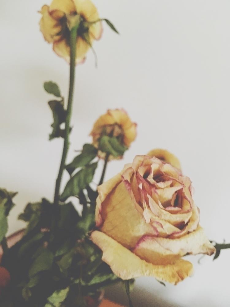 dead flowers beautiful  - photoedits - xulsolar | ello