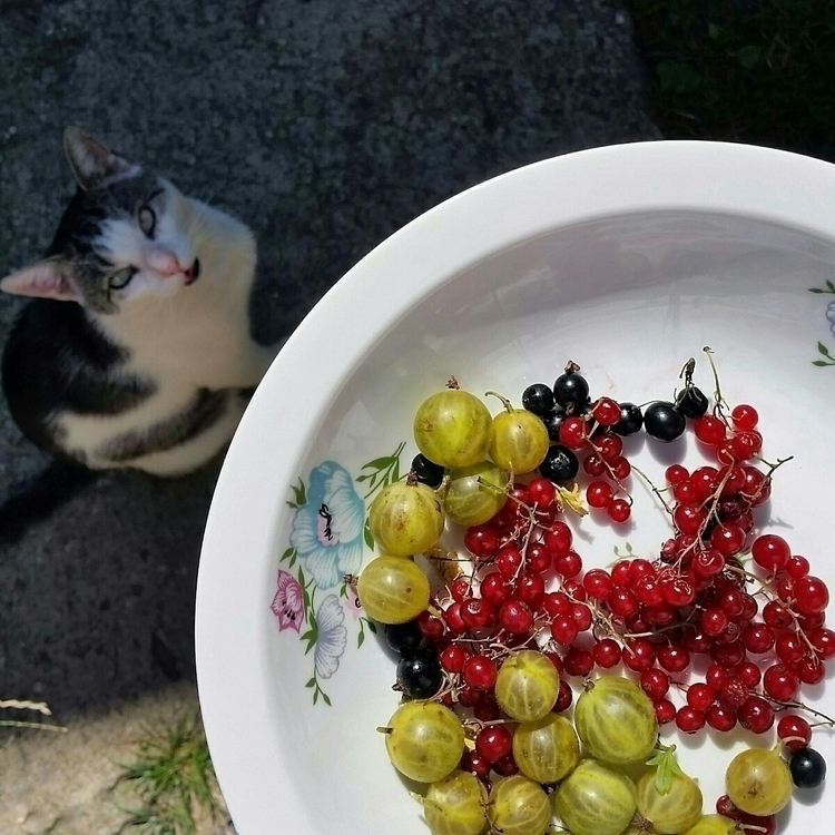 snapshot, cat, gooseberries, currants - aleksaleksa | ello