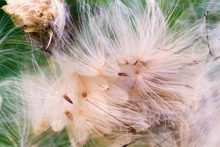 Fairy dust - bradverts   ello