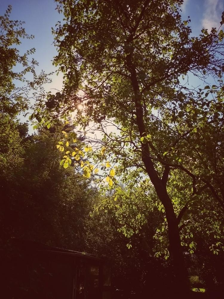 trees, sun, sunny, warm, sunday - claudio_g_c | ello