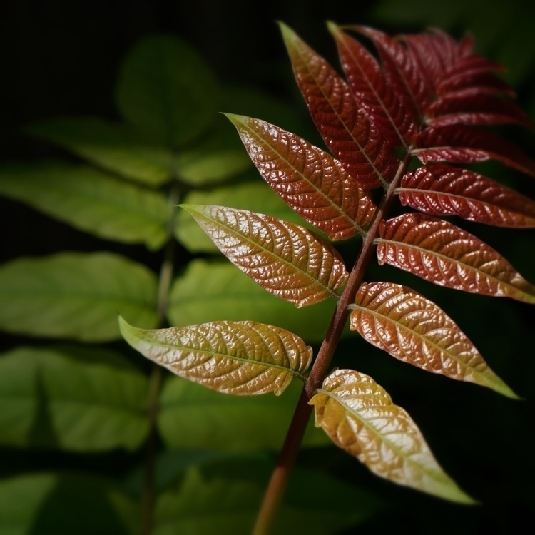 Acetate - photography, plant, macro - marcushammerschmitt | ello