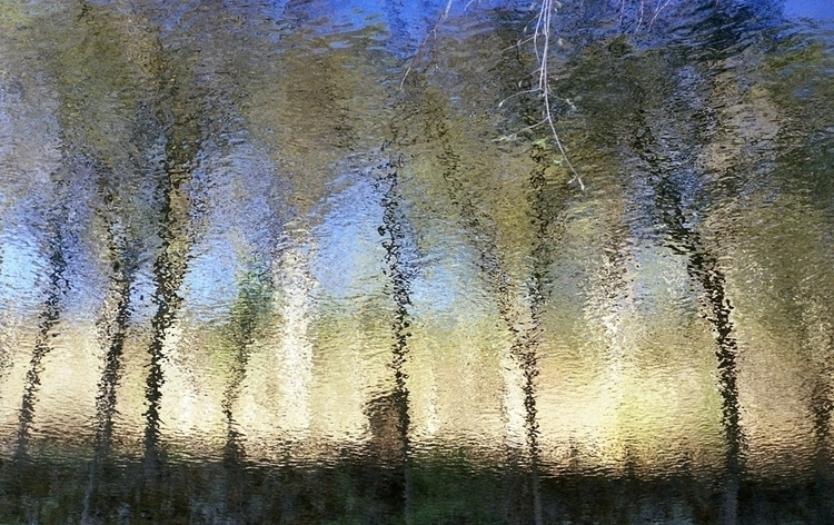 Forest spring. 35mm color Scann - estebanabdala | ello