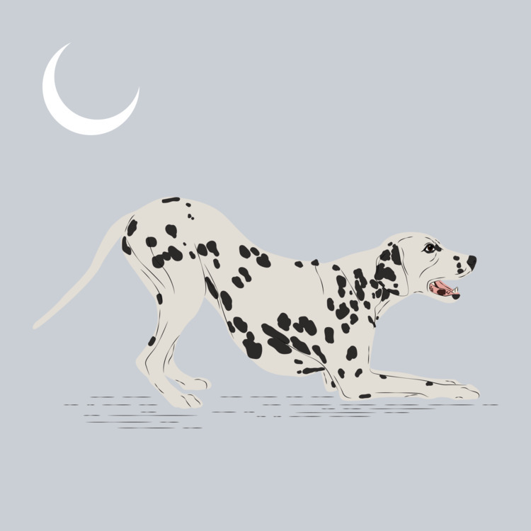 Dalmatian Digital 2017 - illustration - xeezles | ello