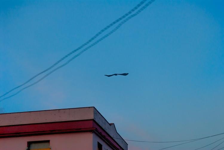 early bird - Cuba - christofkessemeier   ello