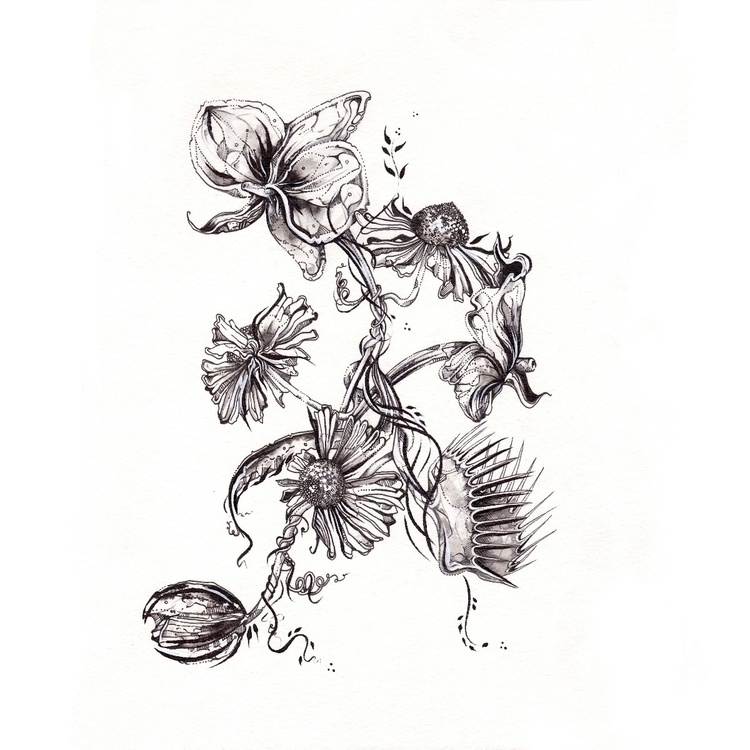 botanicals, drawing, pencildrawing - femsorcell | ello