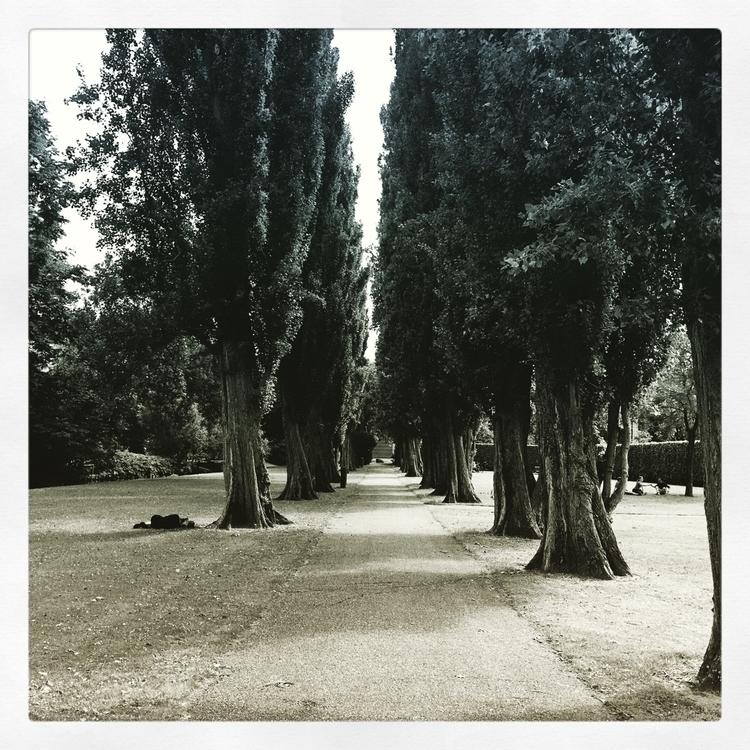 photo, photography, iphone6plus - curious_jella | ello