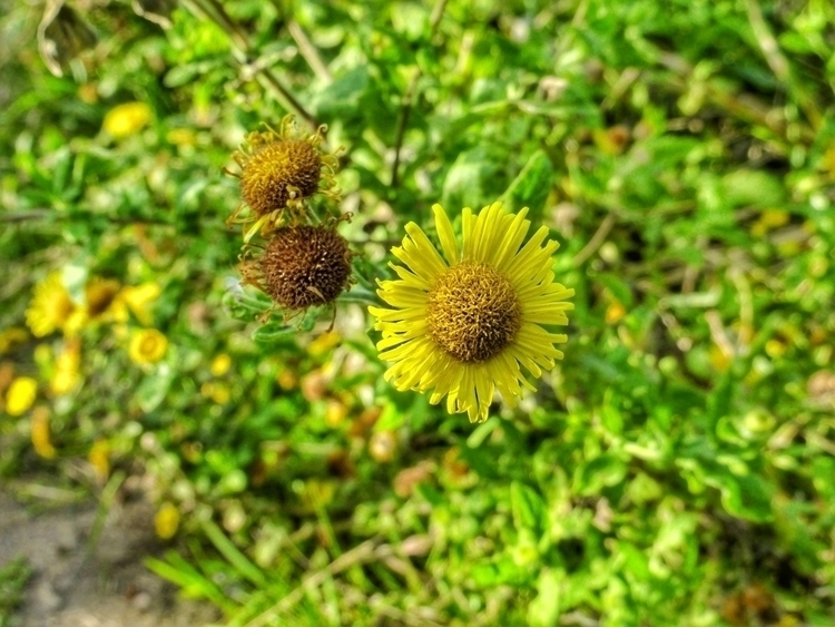 Verge flowers (Panasonic LUMIX  - paulbines   ello