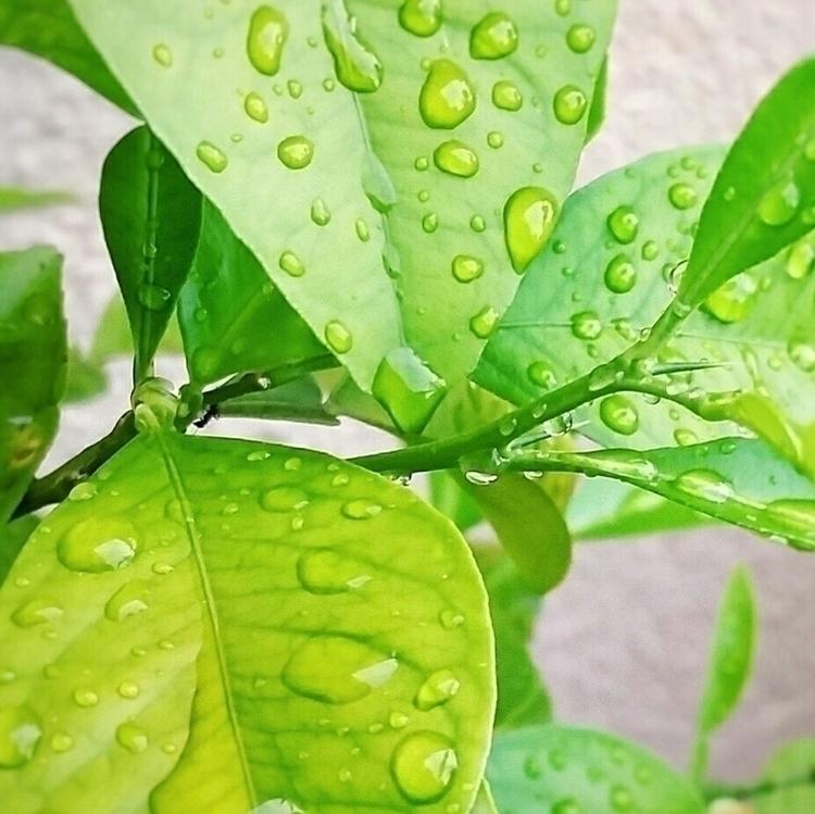 raindrops, green, leaves, summertime - aleksaleksa | ello