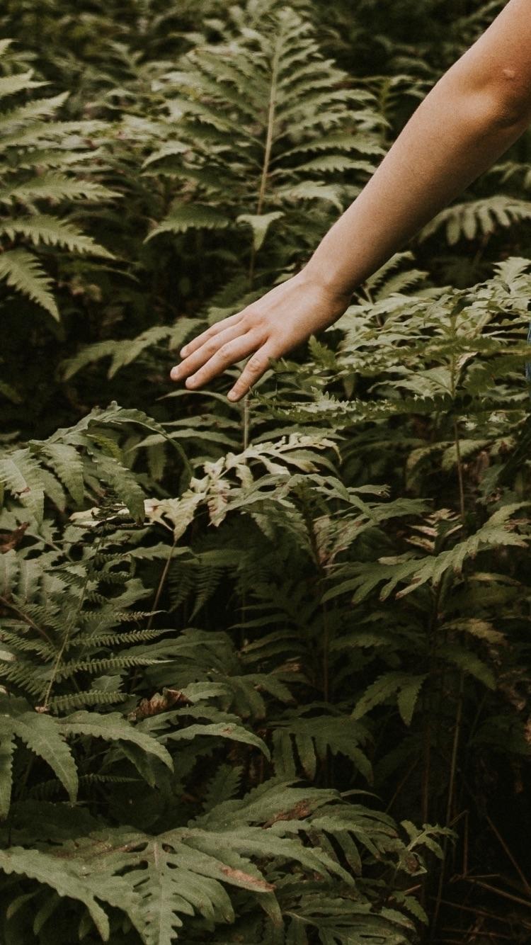 Escape - forest, nature, wild, art - charles_collin | ello