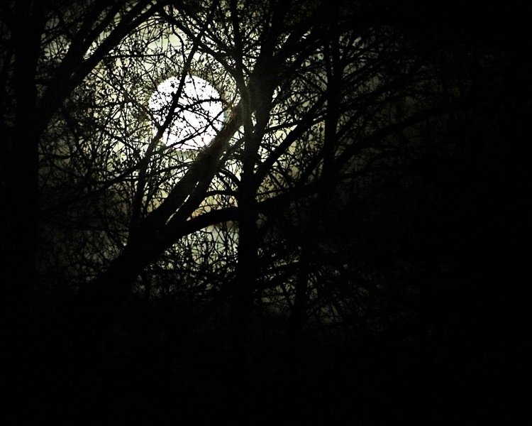 Full moon, bare trees - photography - kenlong | ello
