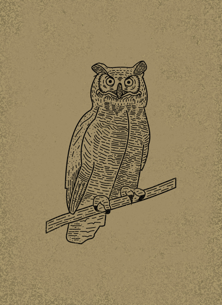 Owl | Sam Broom sambroom.com - illustration - sambroom | ello