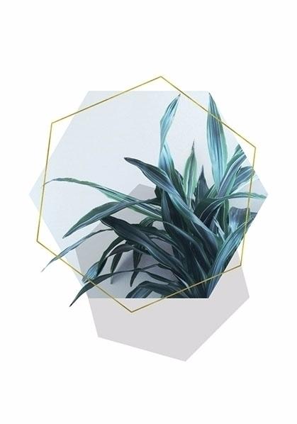 Geometric Jungle Cafelab Submit - cafelab   ello