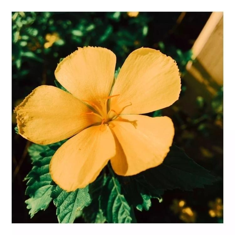 photography, yellow, green, plant - shitshowco | ello