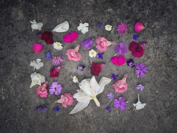 Fallen flowers.:cherry_blossom - johannandeage   ello