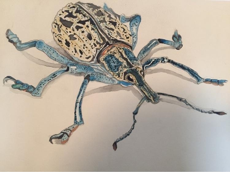 Peruvian Weevil - tontolizer | ello