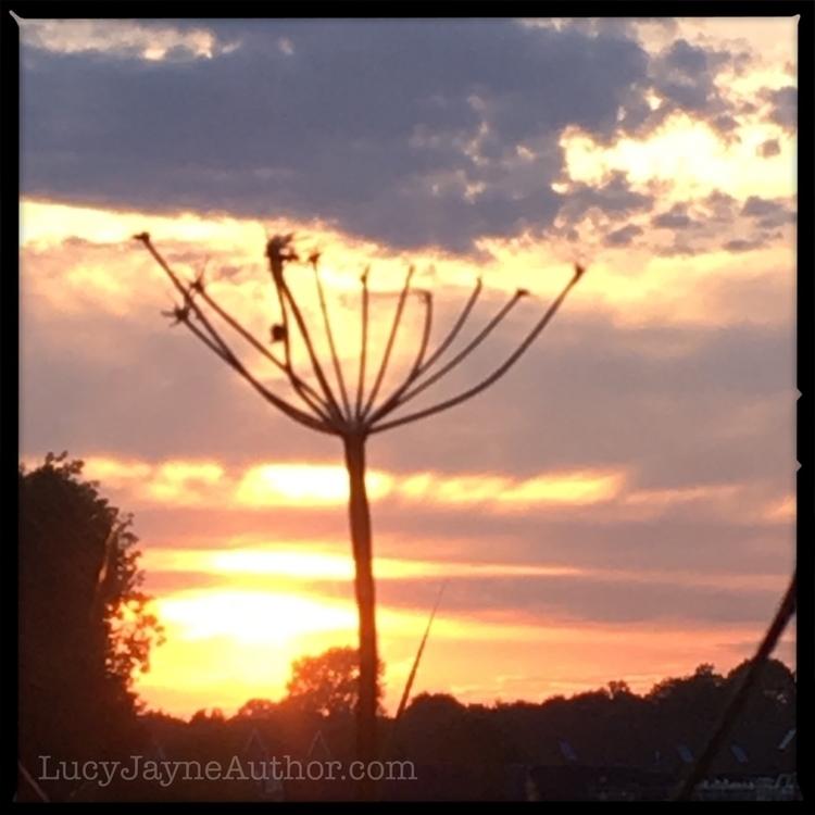 walk sunset :blush:⠀ - writerslife - lucyjayne | ello