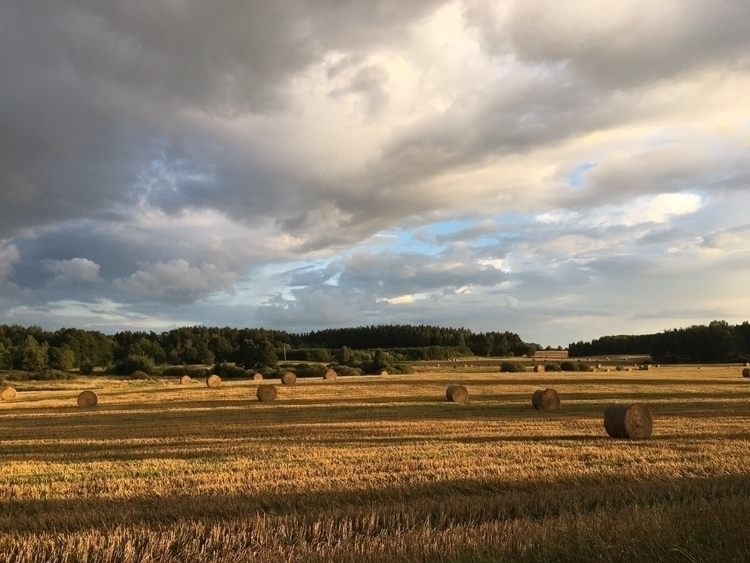 Bike ride - photography, field, clouds - nopsledge | ello