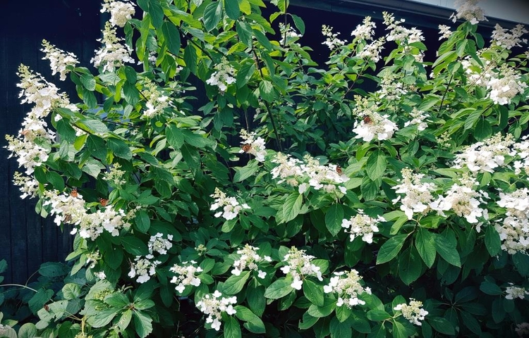 garden center shrubs trees - online - grimmsgardens | ello