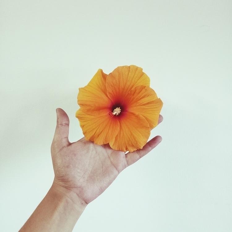 Hibiscus Studies, 2017 Submitte - aurpera | ello
