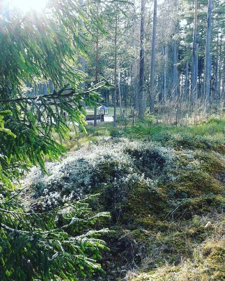 Mycket grön året runt på Smyckn - skogskyrkogardar | ello