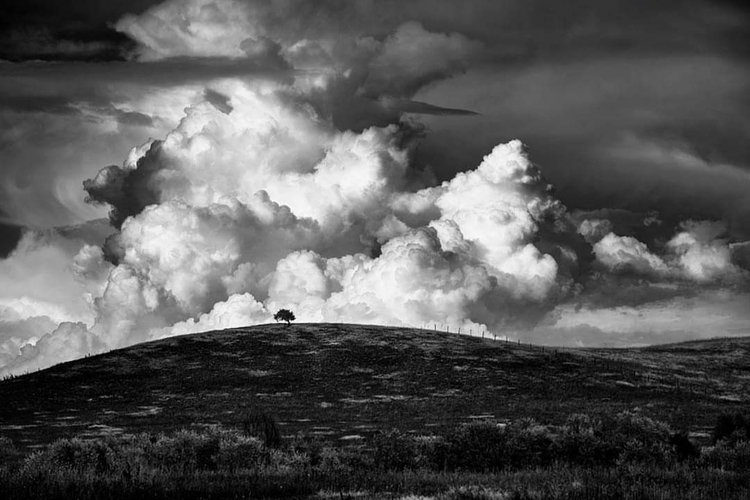 loner trees - landscapephotography - dscottclark | ello