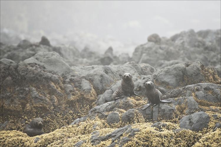 Seal pups - Akaroa, Zealand - pw-pix | ello