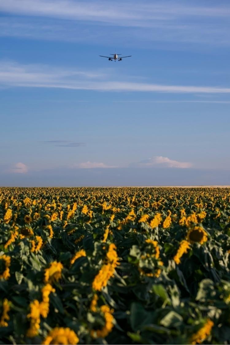 Sunflower season Colorado - ellophotography - galen1973   ello