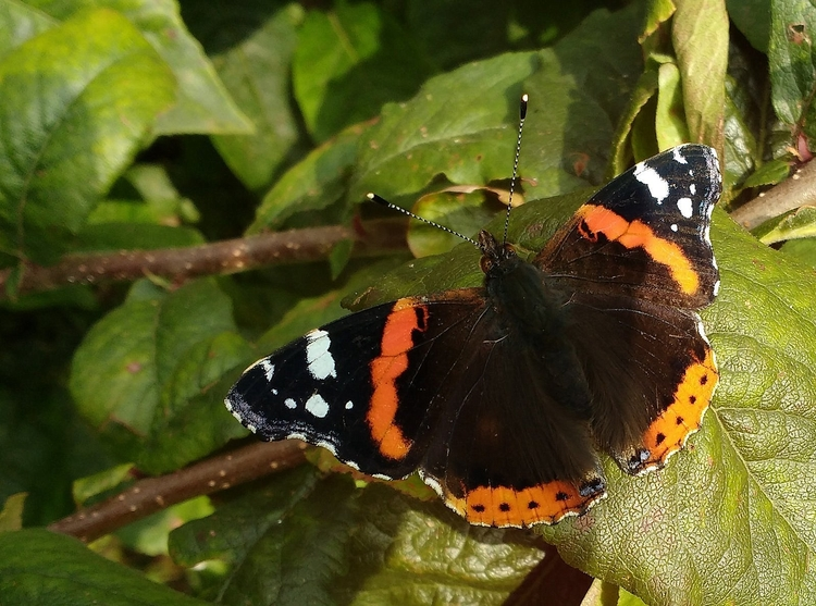 1. Red Admiral Butterfly 2. Cre - firehorsetextiles | ello