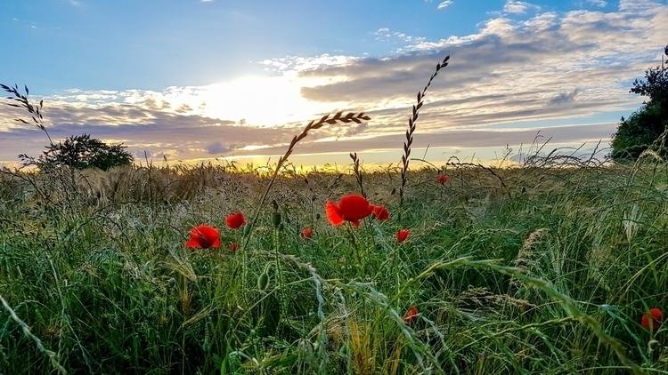 feel freedom..#sunset - flower, sun - rockedly | ello