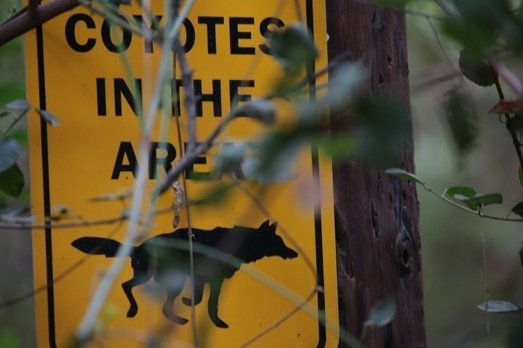 Coyote sign, Orcutt Ranch, West - ellomaggie | ello