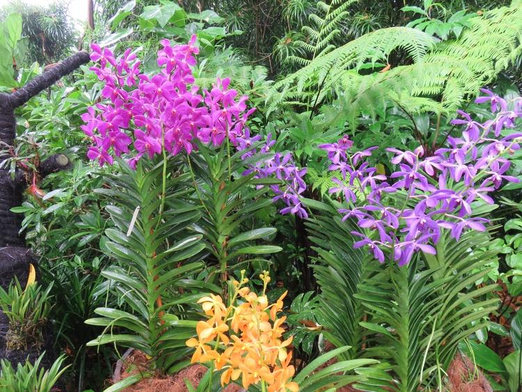 orchid, flower, Singapore#BotanicGarden - sanftekuss | ello