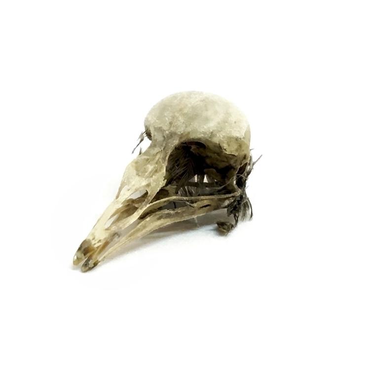 Bird skull - ignisletum, adeathcinematic - simpleboxconstruction | ello