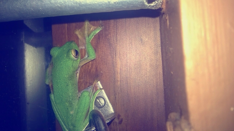 green frog visited long  - photography - riburoby | ello