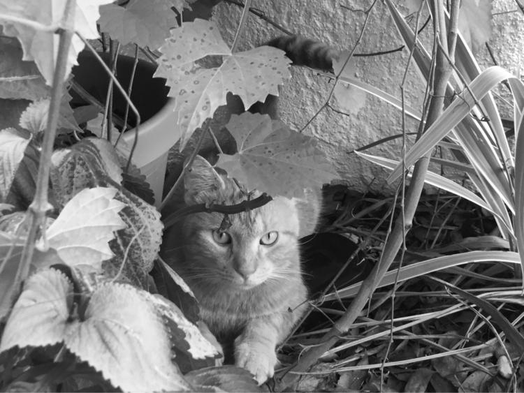 Tiger Sneaky Hiding Grape Tree  - mikefl99 | ello