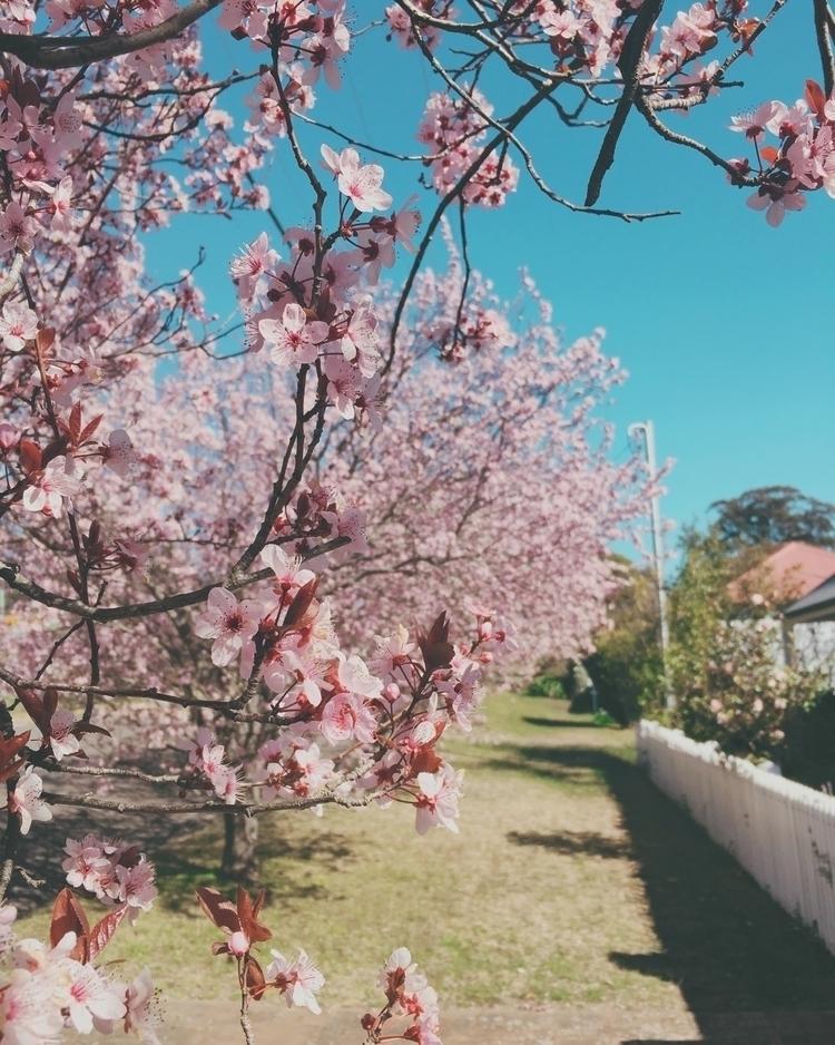 Spring - lucidreaming | ello
