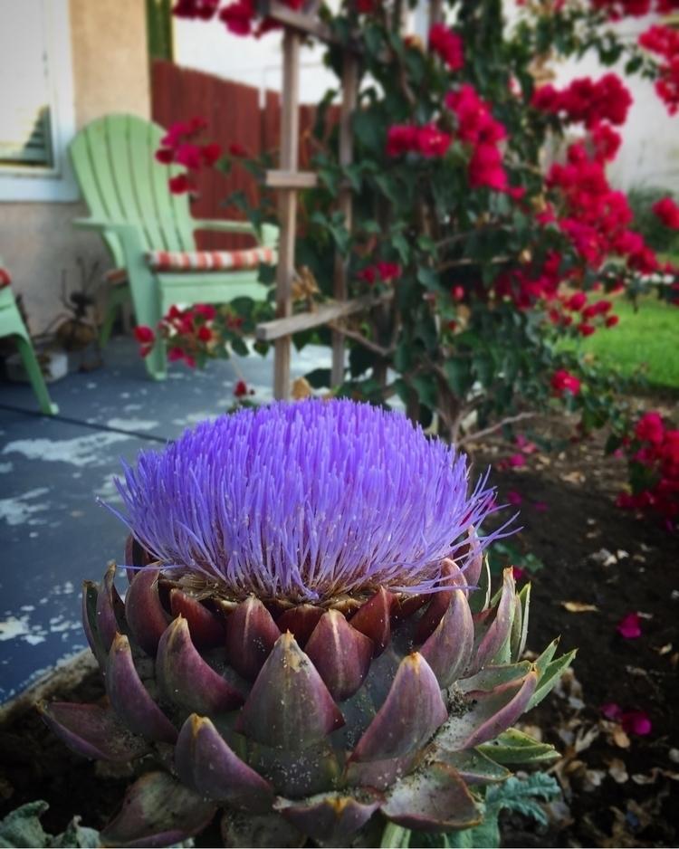Artichoke heart. Blooming - hefti3 | ello