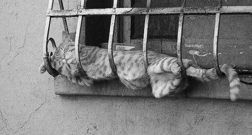 Alternative Daysleeper:cat - momiroh | ello