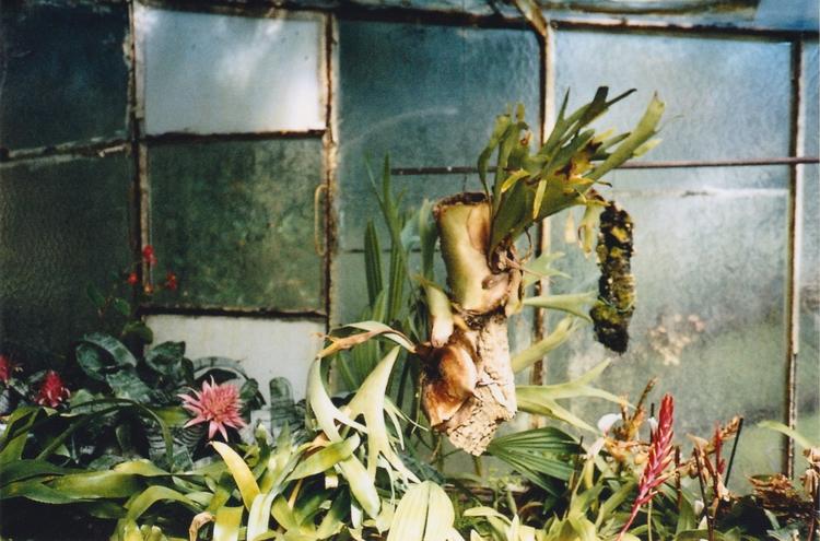 Plantes tropicales - 1, photographer - acidecabine | ello
