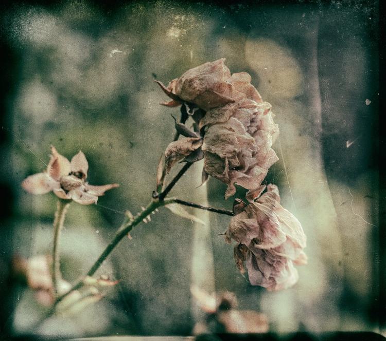 Poesie - illustration, photography - melankomikerin | ello