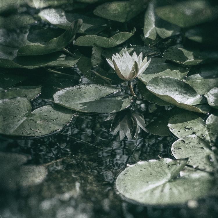 Reflections pond - nature, natureart - peter_skoglund | ello