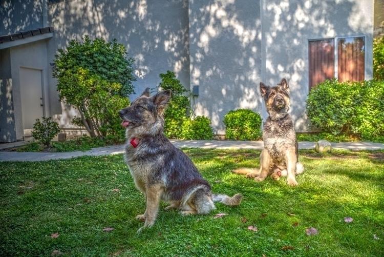 Pups hanging San Fernando Valle - ellomaggie | ello