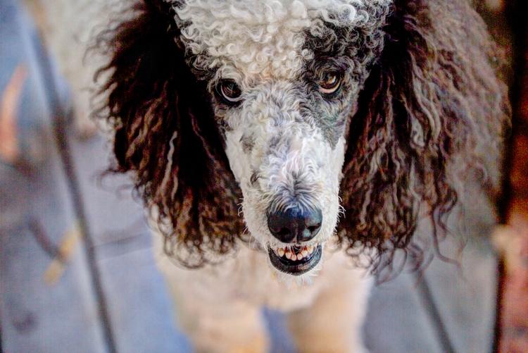 Gabe dogs - ellomaggie | ello