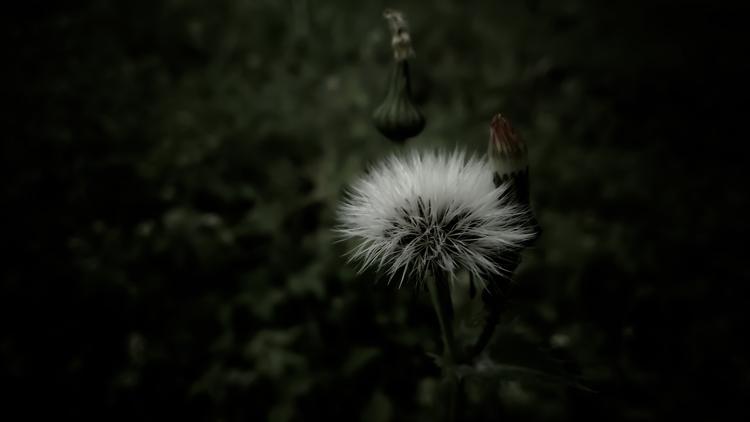 lithuania, nature, naturelovers - beheroght | ello
