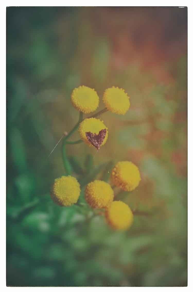 °summer colors° fine art - melankomikerin - melankomikerin | ello