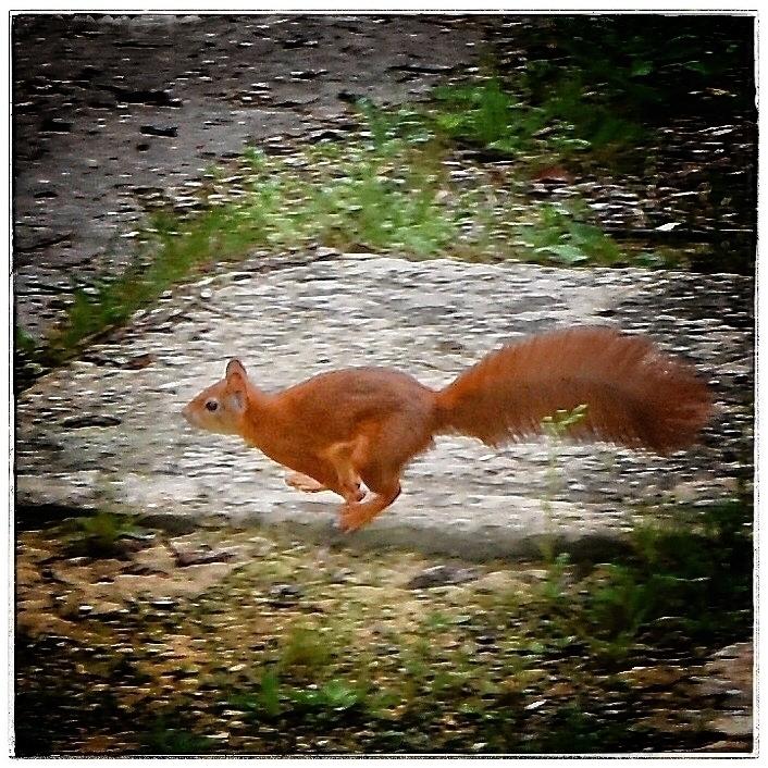 squirrelcollectingnuts, greatworker - willkreutz   ello