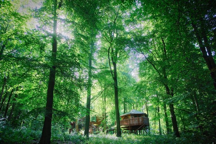hut forest (kinda - dominicy | ello