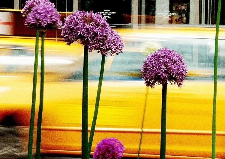 gallery....Unexpected Flowers - streetphotography - hixposure | ello