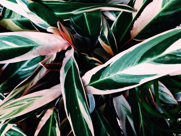 Beige Plants - thalebe | ello